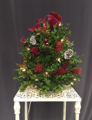 Holiday Splendor Fresh Boxwood Tree in Norwich, CT | LeFrancois Floral and Gifts