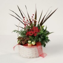 Holiday Time  Dish Garden