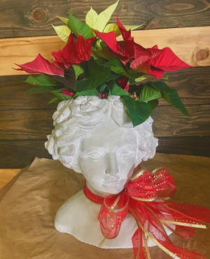 Holly Day live plant with decorative container in Lakeside, CA | Finest City Florist