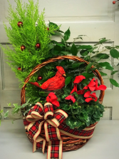 Home for Christmas  Basket Garden
