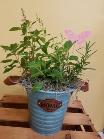 Home Herb Pot