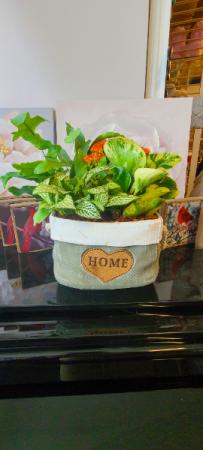 Home Planter