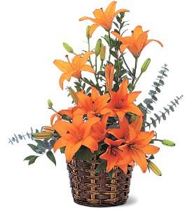 Homegrown Orange Lilies