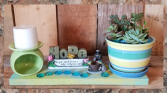Hope Achieves The Impossible Succulent Garden