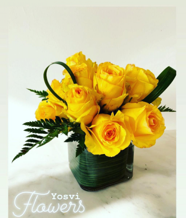 Hope Yellow roses
