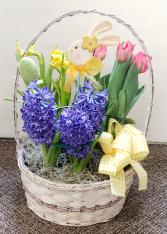 Hoppity Bop Easter Bulb Basket  Plants (local only)