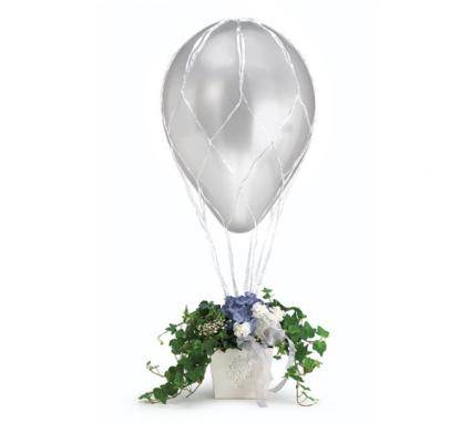 Hot Air Balloon Plant
