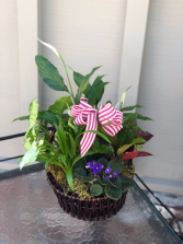 house plants in a basket
