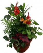 House Plant Planter
