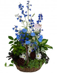 House Plants W / Fresh Cut Flowers