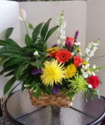 HousePlant & Flower Combo Plants