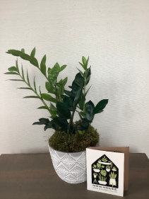 Housewarming Houseplant Set Gift Basket