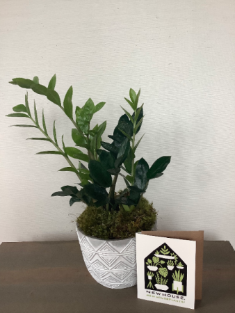 Housewarming Houseplant Set Gift Basket