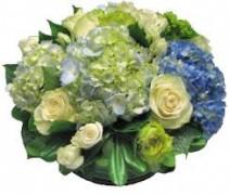Hues of blue Cut Flowers