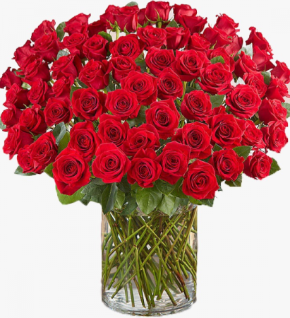 Hundred Classic Red Roses  Classic Red Roses