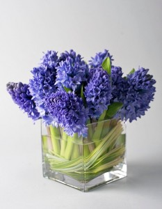 Hyacinth Blues Buster Vased Arrangement, Compact