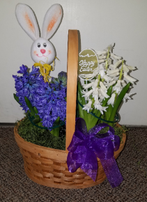 Hyacinth Garden   (Local delivery or pick up only) Bulb basket