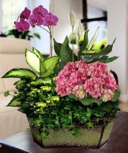 Hydrangea and Orchid Garden Plant