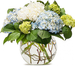 Hydrangea And Willow Bowl Flower Arrangement in Tulsa, OK   THE WILD ORCHID FLORIST