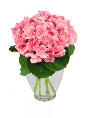 Hydrangea Happiness Bouquet in Anderson, SC | NATURE'S CORNER FLORIST