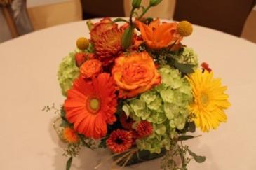 Hydrangea Harvest