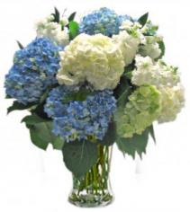 Hydrangea Heaven Cut Flowers