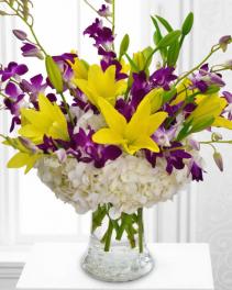 Hydrangea & Orchid Elegance Arrangement