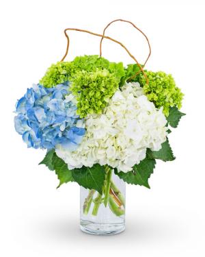 Hydrangea Perfection Flower Arrangement in Nevada, IA | Flower Bed