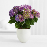 Hydrangea Plant Resin Container (Color Varies)