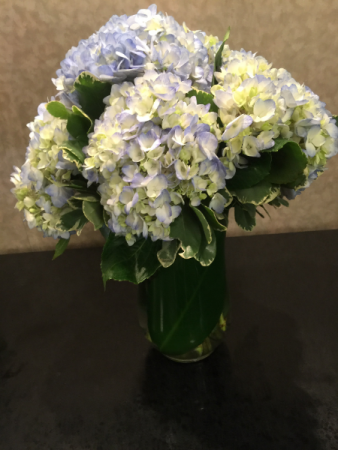 Hydrangea Skies Vase Arrangement
