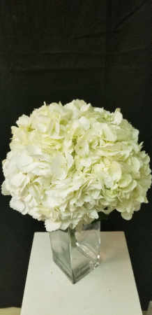 Hydrangea Wedding Package