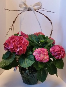 Hydrangea with Willow seasonal in Northport, NY | Hengstenberg's Florist