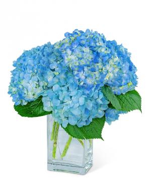 Hydrangeas In Blue Flower Arrangement in Nevada, IA | Flower Bed