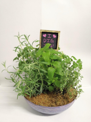 I Dig You  Herb Garden in Springfield, MO | FLOWERAMA #226