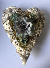 I Heart You In Succulents