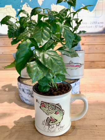 I'd Rather Be Fishing Coffee Plant in Coffee Mug