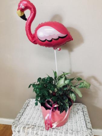 I'm flamingo 4 u Dish garden