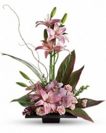 Imagination Blooms with Cymbidium Orchids everyday
