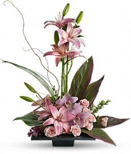Imagination Orchids