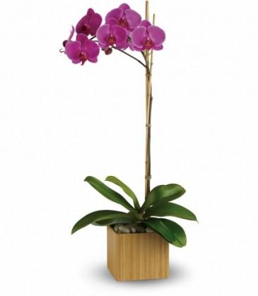 Imperial Purple Orchid  EN-7P