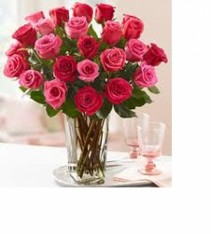 In Love With Pink and Red Roses