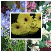 In the cooler:   Carry Out Specials Delphinium, Alstromeria and Gerbera.