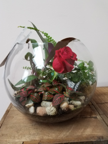 Indoor Garden of Love Terrarium