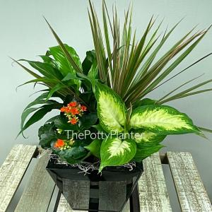 Indoor Planter  in Etobicoke, ON | THE POTTY PLANTER FLORIST