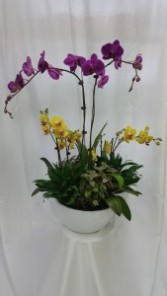 Inspiration Orchids