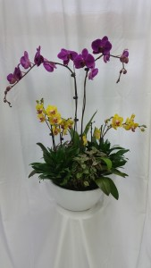 Inspiration Orchids  in Huntington Beach, CA | SEACLIFF FLORIST