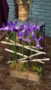 Iris Garden Container