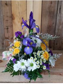 Iris Soaring  Fresh