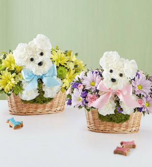 It's a-DOG-able® Boy or Girl  in Saint Cloud, FL | Bella Rosa Florist