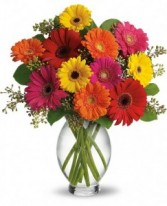 Gerber Daisy Brights                   vased